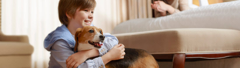 Pet-Friendly Needham Hotel
